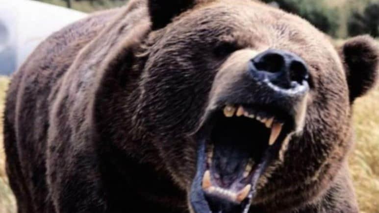 Ανέκδοτο: Η πεινασμένη αρκούδα και τα αθλητικά παπούτσια. Φοβερό γέλιο