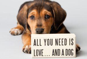 Γιατί τα σκυλιά ζουν λιγότερο από τους ανθρώπους; Η συγκινητική απάντηση ενός παιδιού-video