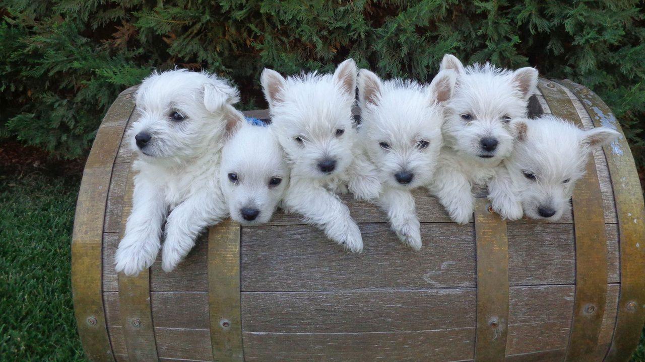 Σκύλος: 6 καταστάσεις που διαισθάνεται ο πιστός μας φίλος πρώτος από όλους!