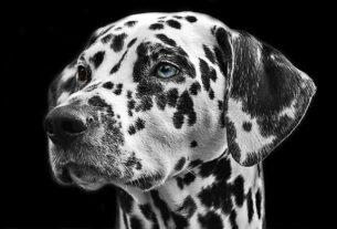 Ανέκδοτο: Ο έξυπνος σκύλος και ο προδότης πίθηκος! Πολύ γέλιο
