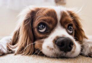 Στείρωση σκύλου: Πρέπει να γίνεται ή Όχι;