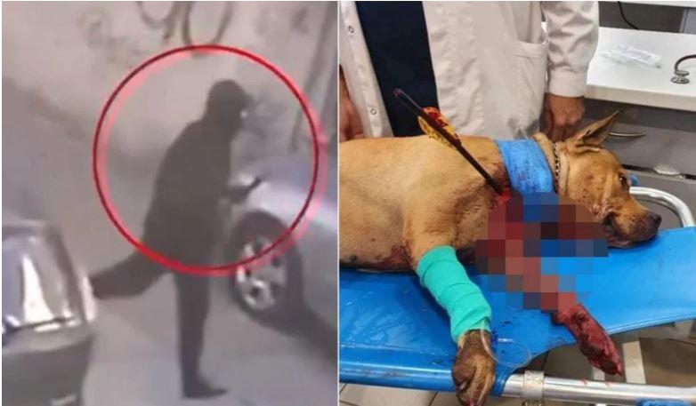 Αυτός είναι ο τοξοβόλος που σκότωσε τον σκύλο στην Πετρούπολη-video