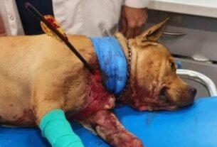 ΣΟΚ! Χτύπησαν με βέλος σκύλο – Νοσηλεύεται σε κρίσιμη κατάσταση!
