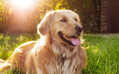 Άλεξ Ο σκύλος που έσωσε μια οικογένεια στον σεισμό της Ελασσόνας!