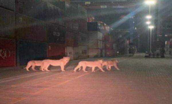 λιονταρια στο λιμανι του Πειραιά