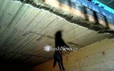 """Χανιά: Βρέθηκε και θα πληρώσει 30.000€ πρόστιμο το """"τέρας"""" που είχε κρεμάσει σκύλο από γέφυρα"""