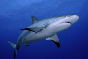 Viral Βίντεο: Καρχαρίας κολυμπά στο λιμάνι του Πειραιά!