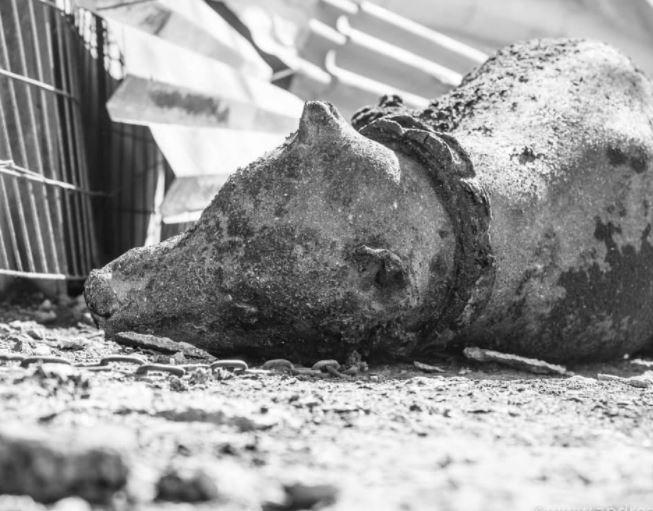 ΤΡΑΓΙΚΕΣ εικόνες από την καταστροφική φωτιά στον Σχίνο – Απανθρακώθηκαν ζωντανά χιλιάδες ζώα (video-photos)