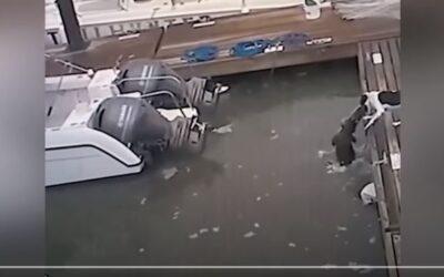 Viral Βίντεο: Σκύλος ξεφεύγει από φονικό κεφαλοκλείδωμα αλιγάτορα!