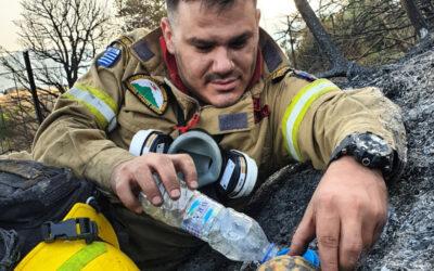 Φωτιά Αχαΐα: Viral έγινε ο πυροσβέστης που δίνει νερό σε χελώνα (φωτο)