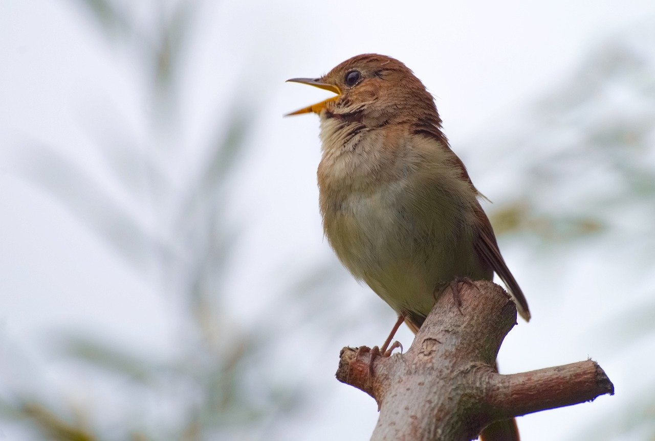 Διδακτικό Ανέκδοτο: Το έξυπνο πουλί και οι τρεις κανόνες της ζωής
