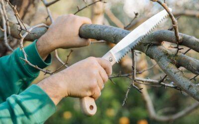 Καταργείται η άδεια του Δασαρχείου για κλάδεμα δέντρων εντός οικοπέδων!