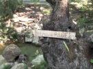 Ράθες Καπανδριτίου: Η μυστική γωνιά δίπλα στην Αθήνα που θα σε ενθουσιάσει